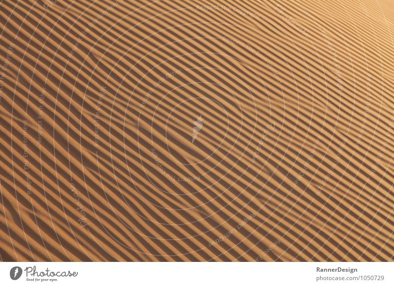 """Desert Structure Landscape Earth Sand """"Wahiba Desert Oman"""" Warm-heartedness Contentment Loneliness Colour photo Exterior shot Pattern Structures and shapes"""
