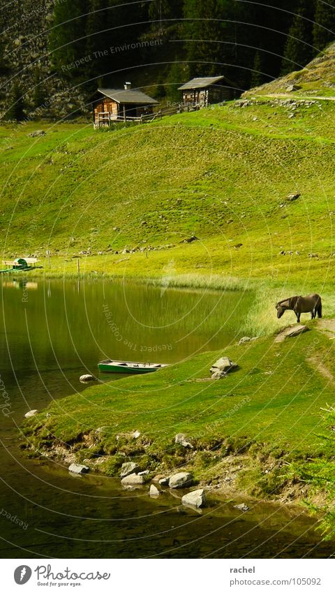 Vacation & Travel Calm Relaxation Meadow Grass Mountain Landscape Contentment Hiking Horse Alps Idyll Serene Hut Lake Pasture