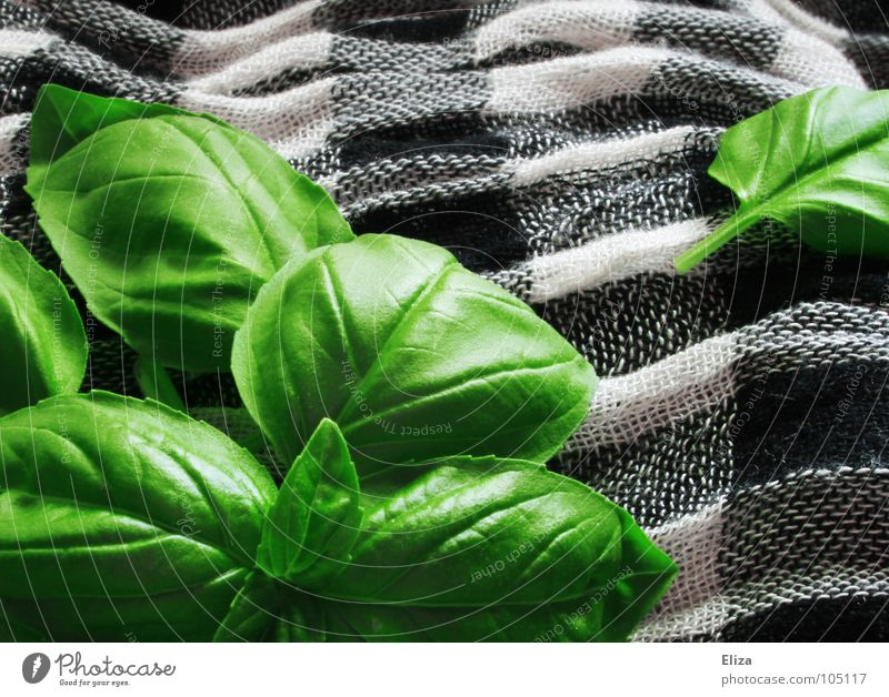 basil Food Herbs and spices Nutrition Vegetarian diet Healthy Fragrance Waves Garden Kitchen Gastronomy Plant Pot plant Cloth Scarf Illuminate Fresh Delicious