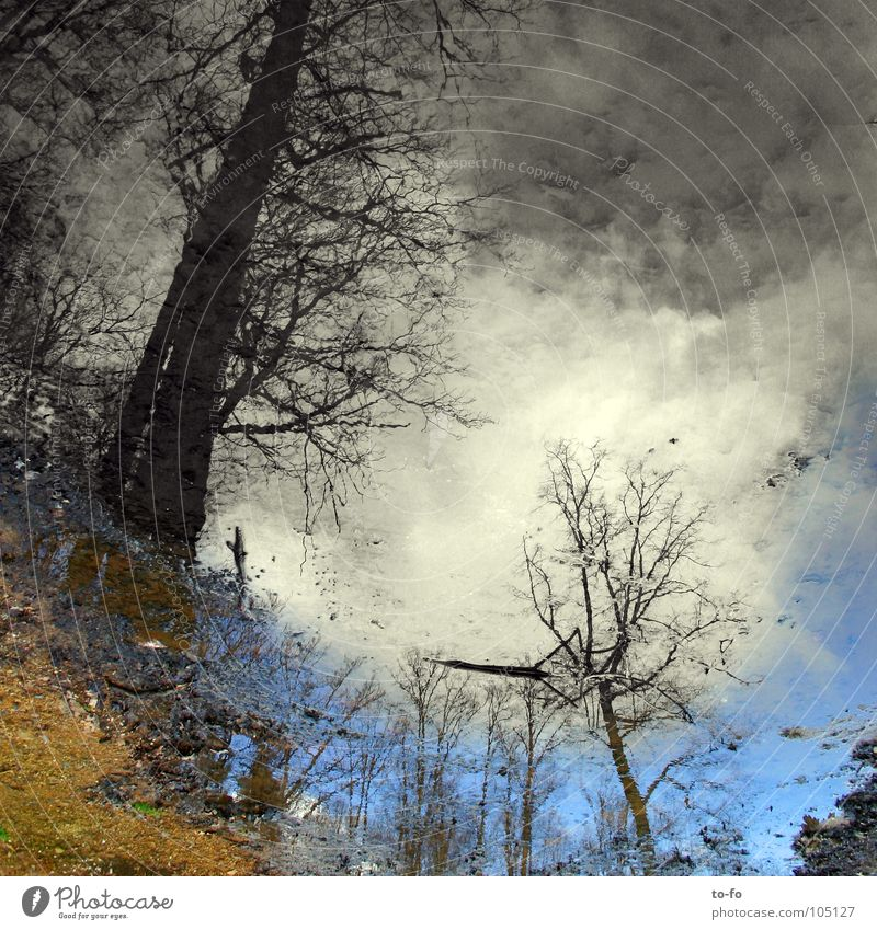 bottom-up Mirror Reflection Puddle Forest Vague Mirror image Unclear Inverted Fairy tale Water Sky Painted