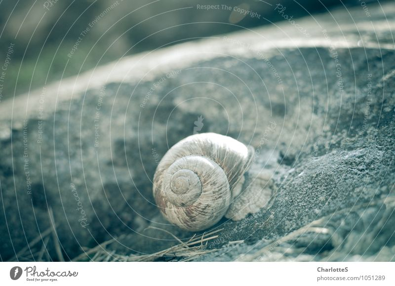 Oh! Art thou golden. Grass Fern Farm animal Snail 1 Animal Stone Sand Concrete Touch Movement Living or residing Caution Serene Patient Calm Snail shell Tracks