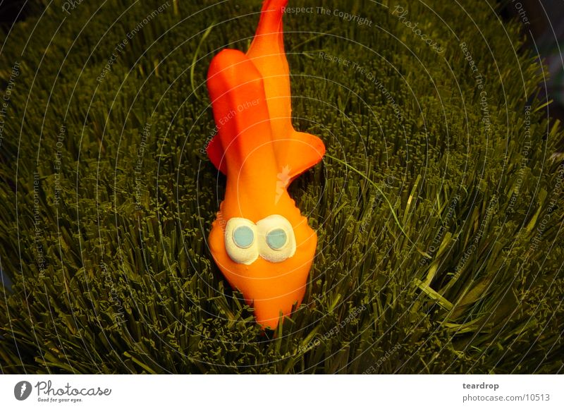 Grass Orange Shark Photographic technology Clothes peg