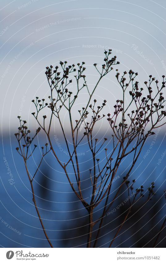 winterproof Plant Water Winter Bushes Coast Baltic Sea Island Calm Blue Colour photo Exterior shot Morning Back-light