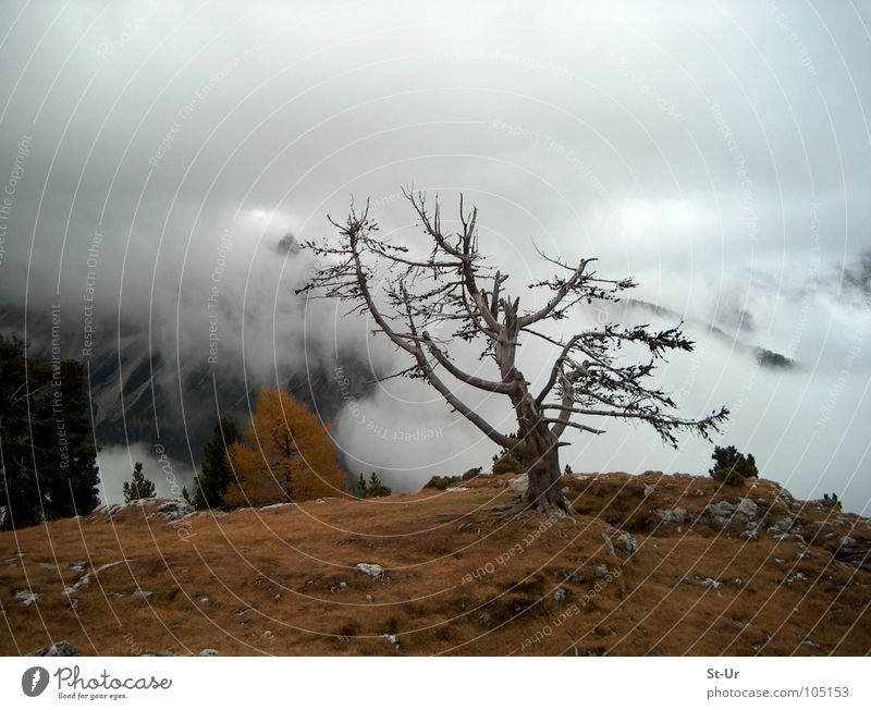 Tree Mountain Autumn Fog Grief