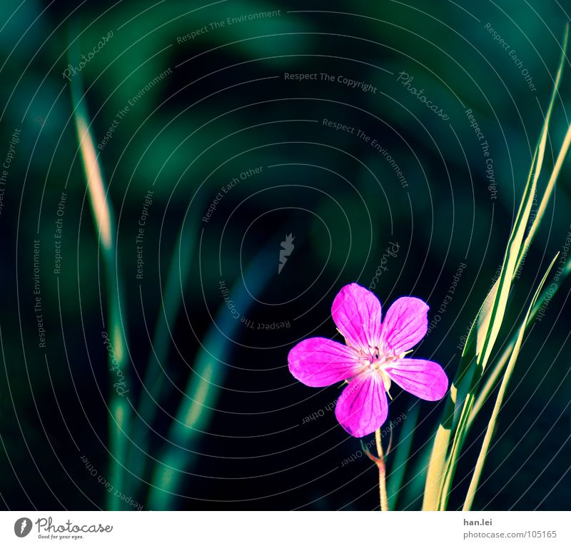 little flowers Beautiful Nature Plant Flower Grass Blossom Meadow Green Pink Loneliness Blade of grass Blossom leave blablabla Colour photo Copy Space top Day