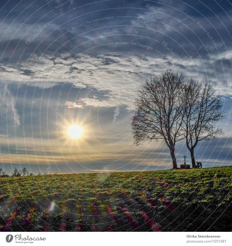Weather | Day of the sun Environment Nature Landscape Earth Air Sky Clouds Horizon Sun Spring Winter Beautiful weather Plant Tree Grass Meadow Field Crucifix