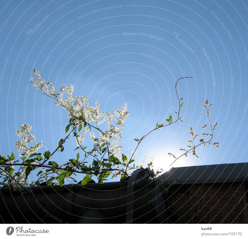 noonday sun Plant Flower White Green House (Residential Structure) Roof Rain gutter Strong Light Environment Midday Sun Radiation Dark Search Background picture