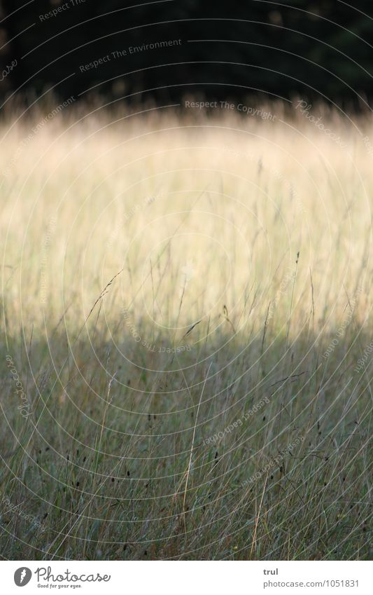 3 layers Nature Landscape Sunlight Summer Grass Bushes Park Meadow Level Contrast Stripe Bright Dark Colour photo Exterior shot Deserted Neutral Background