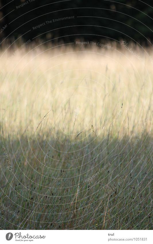 Nature Summer Landscape Dark Meadow Grass Bright Park Bushes Stripe Level