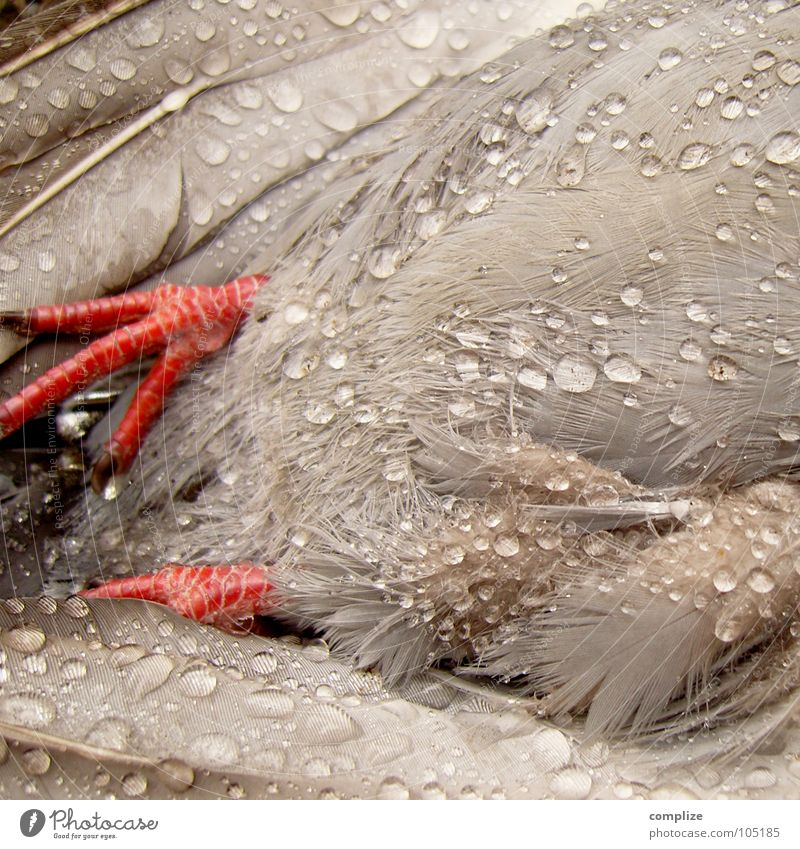 Red Death Gray Feet Rain Bird Flying Drops of water Wet Rope Fresh Grief Feather Transience Stomach Distress