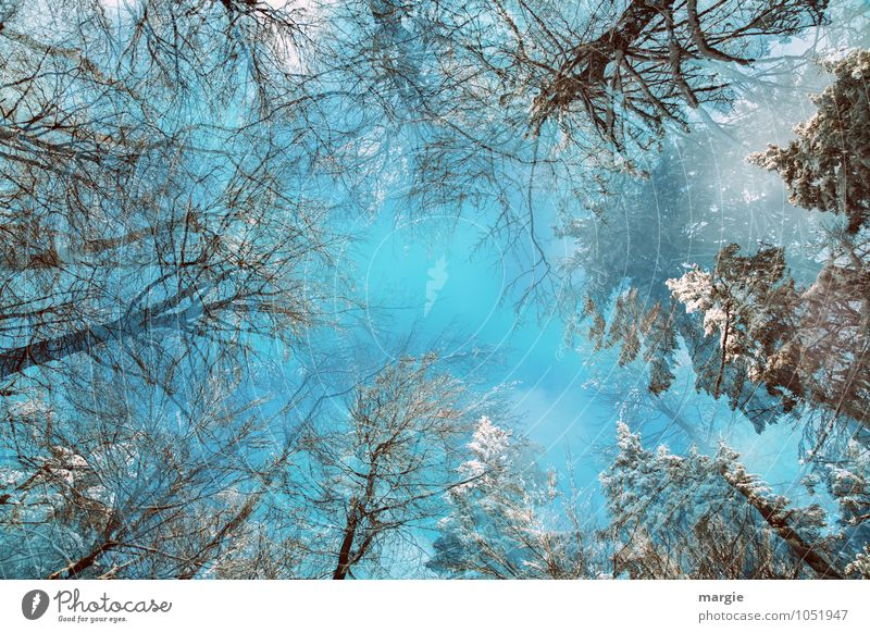 winter magic Environment Nature Sky Winter Climate Ice Frost Snow Snowfall Tree Tree trunk Mixed forest Forest Winter forest Growth Threat Success Gigantic Blue