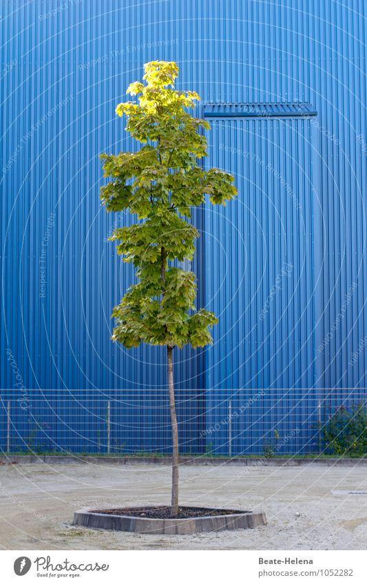 Blue Plant Beautiful Green Summer Tree Environment Warmth Lanes & trails Gray Metal Facade Contentment Arrangement Wait Trip