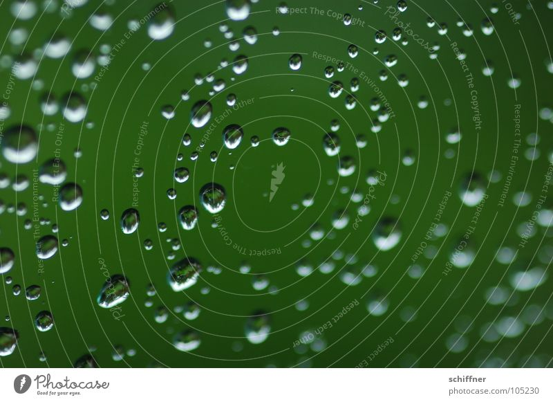flurry of pearls Drops of water Hydrophobic Wet Rain Green Water Window pane Plant Shadow Macro (Extreme close-up)