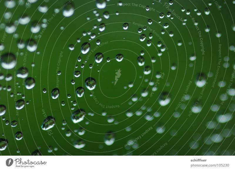 Plant Green Water Rain Drops of water Wet Window pane Hydrophobic