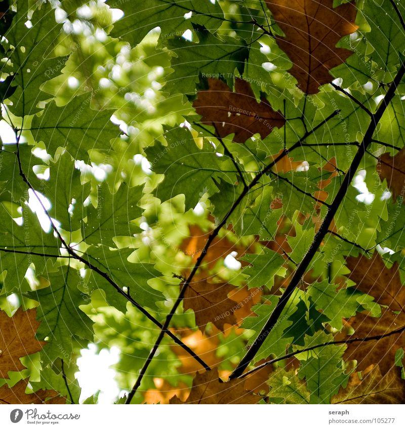 Autumnal Foliage Sky Nature Colour Plant Tree Leaf Branch Seasons Twig Tree bark Maple leaf Maple tree Rachis Leaf green