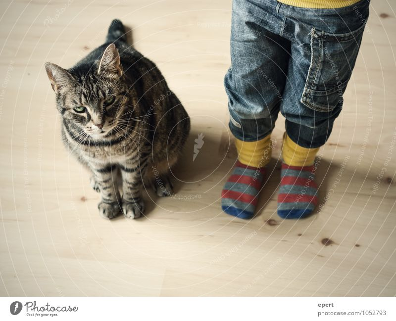 On patrol(s) Child Infancy Jeans Stockings Animal Cat Observe Wait Happiness Trust Together Curiosity Expectation Innocent Attachment Colour photo Interior shot