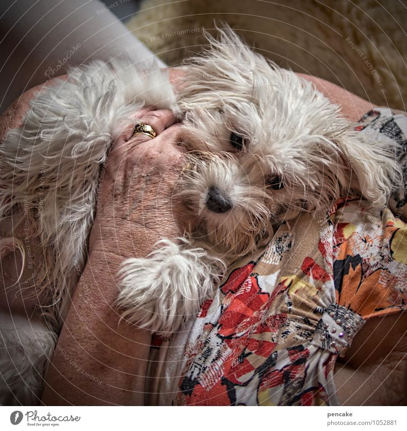 Dog Old Hand Animal Senior citizen Feminine Together Friendship Lie Contentment 60 years and older Clothing To enjoy Joie de vivre (Vitality) Communicate