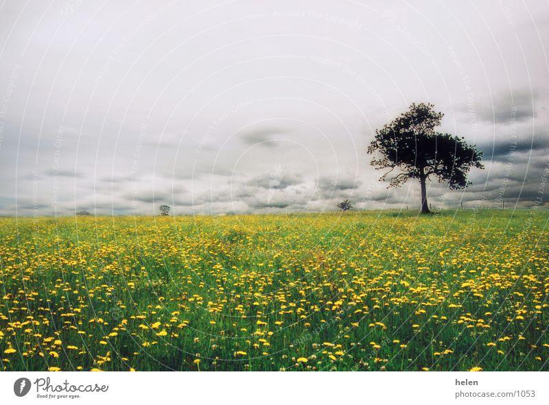 la mer jaune Meadow Tree Sky
