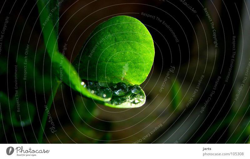 Water Sun Green Garden Rain Drops of water Rope Fresh Clover Cloverleaf