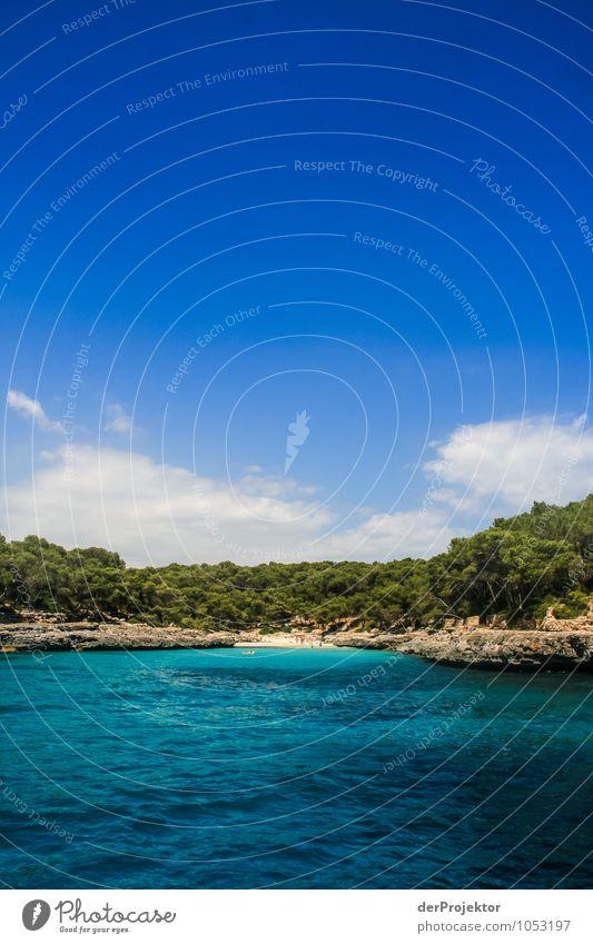 Nature Vacation & Travel Plant Summer Tree Ocean Landscape Joy Animal Beach Forest Environment Emotions Coast Freedom Waves