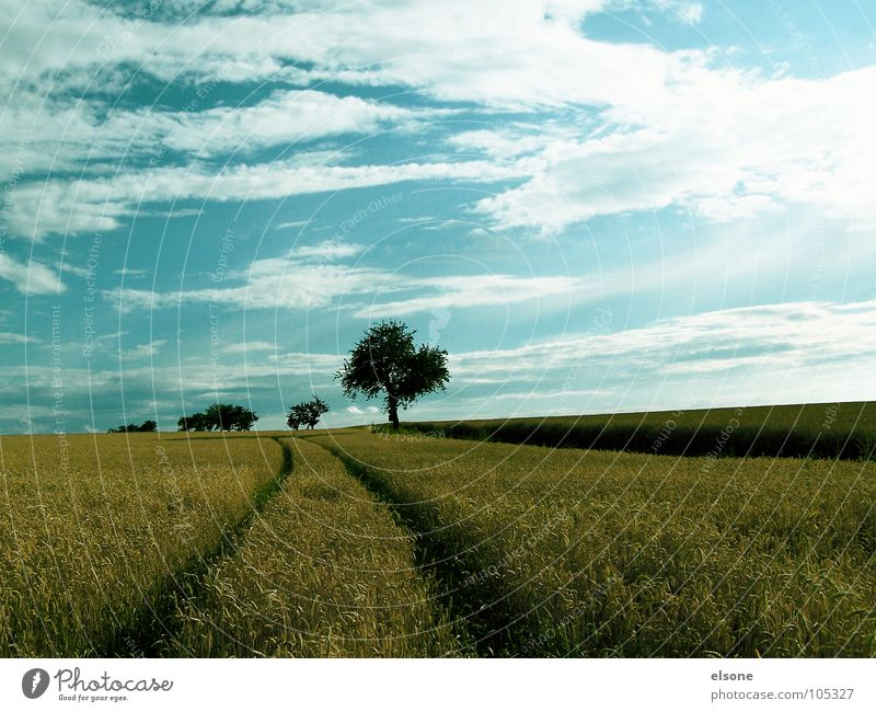 Nature Sky Tree Blue Plant Summer Clouds Nutrition Yellow Lanes & trails Field Food Gold Fresh Tracks Grain