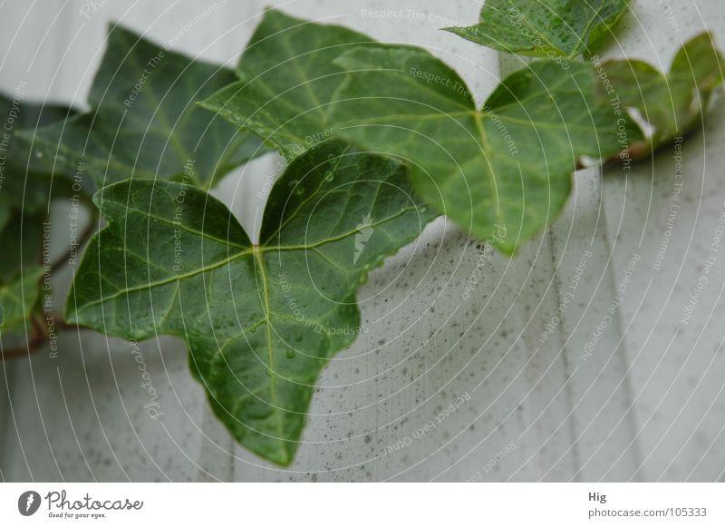 Nature Plant Green Leaf Calm Sadness Autumn Wood Garden Rain Park Fresh Drops of water Grief Twig Stalk
