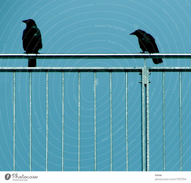 Sky Blue Black Metal 2 Bird Sit Handrail Pain Cinema Grating Frustration Tin Crouch Arrogant Duck down