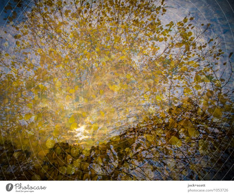 AutumnGold tree Leaf canopy Illuminate natural Warmth Contentment Agreed Idyll Inspiration Dream Change Double exposure Illusion Reaction Colour tone