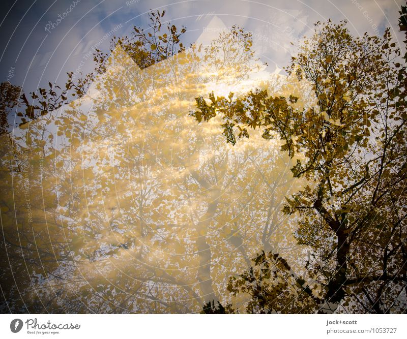 Aurum Autumn Climate change Beautiful weather Leaf canopy Illuminate naturally Warmth Inspiration Double exposure Illusion Visual spectacle Abstract Shadow