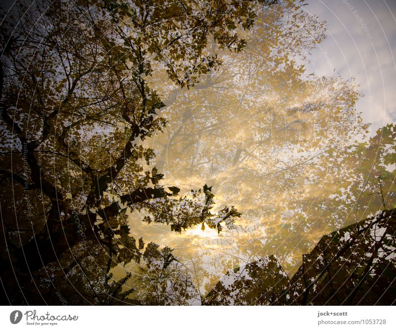 gold leaf Autumn tree Leaf canopy Illuminate Exceptional natural Gold Safety (feeling of) Agreed Idyll Inspiration Surrealism Change Time Illusion Reaction