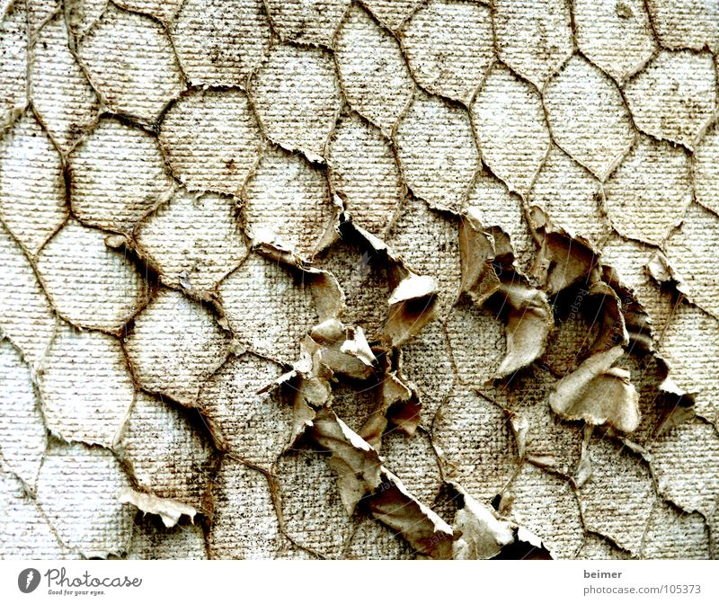 Brown Background picture Broken Mask Craft (trade) Beige Nest Honey-comb Hexagon Site trailer