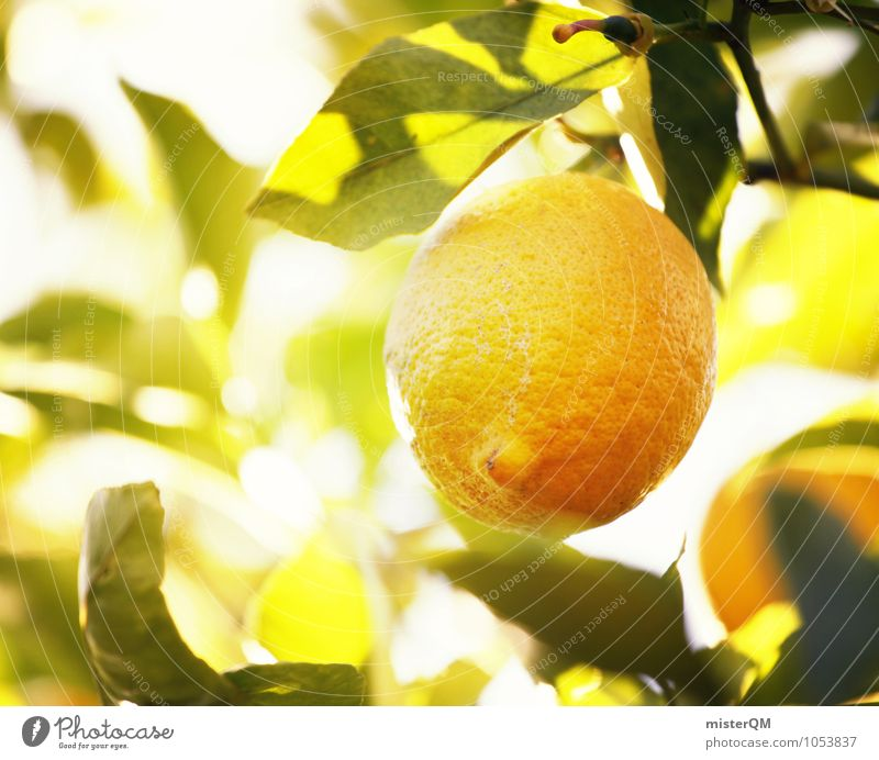Vitamin C Forest II Art Esthetic Lemon Lemon juice Lemon tree Lemon yellow Lemon peel Lemon leaf Healthy Eating Ecological Nature Sour Delicious Fresh Mature