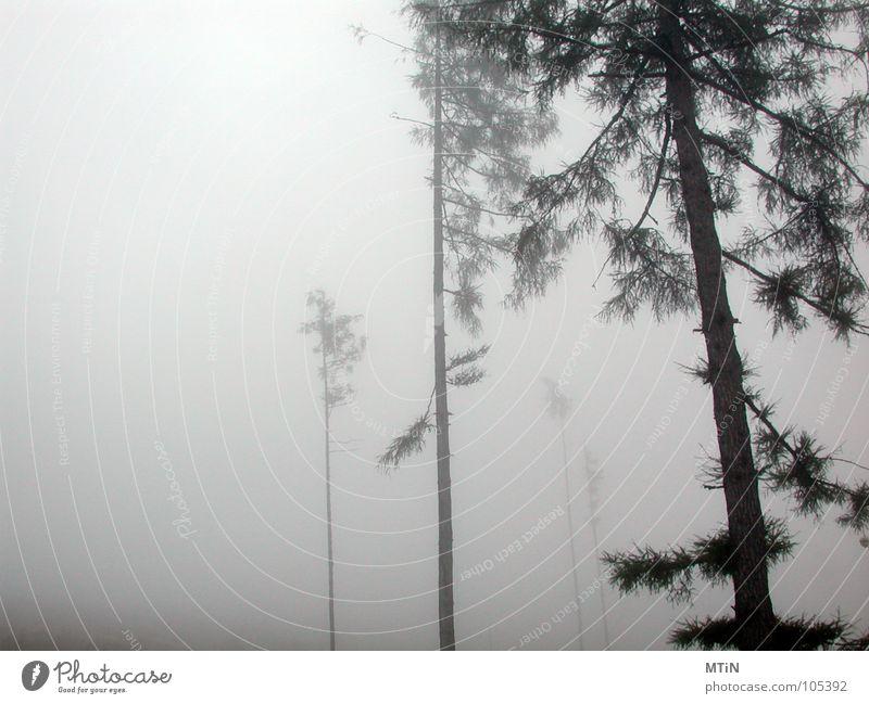 Tree Loneliness Forest Dark Cold Sadness Fog Threat Creepy Harrowing