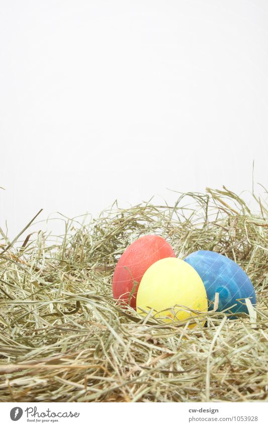 Three Colour Theory of the Easter Bunny Food Egg Nutrition Breakfast Organic produce Living or residing Interior design Decoration Event Feasts & Celebrations