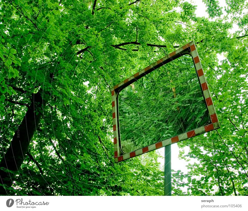 Nature Green Tree Forest Signs and labeling Transport Signage Tree trunk Mirror Frame Road traffic Rod Mirror image Road sign Distorted Refraction