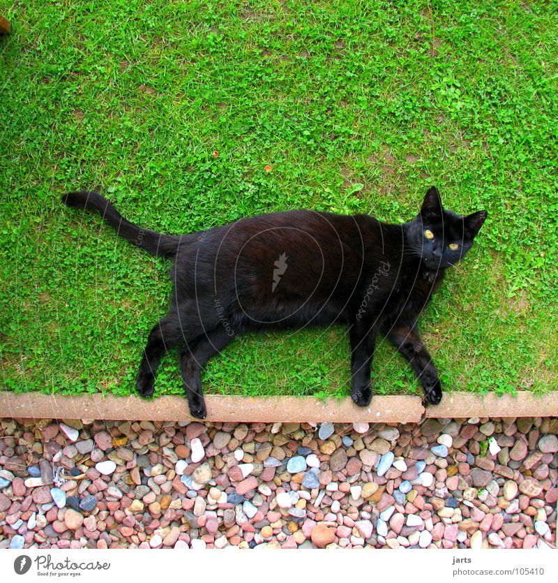 Black Animal Meadow Garden Cat Walking Lie Disaster Mammal