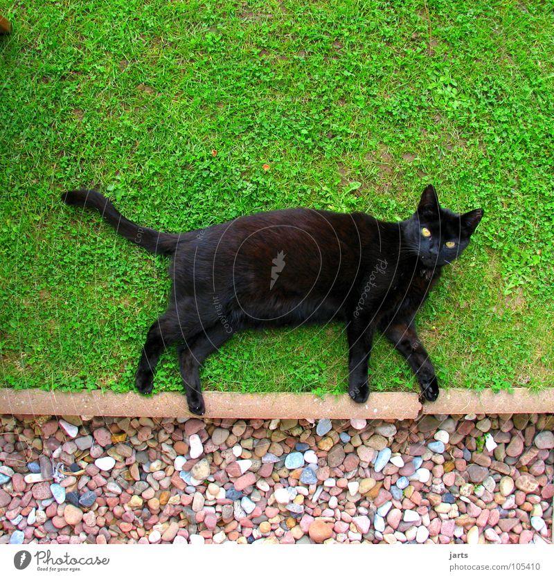 CATWALK Cat Meadow Black Disaster Animal Mammal Garden Walking Lie jarts