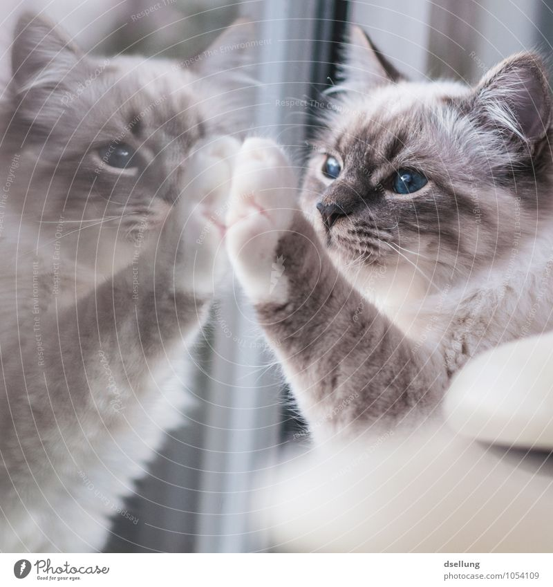 Cat Animal Window Together Friendship Dream Observe Cute Communicate Touch Friendliness Curiosity To hold on Attachment Pet Irritation
