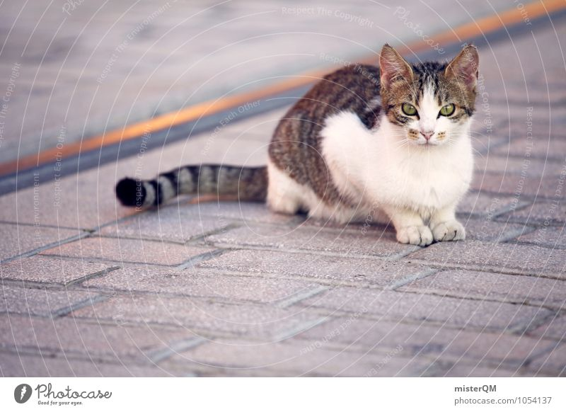 Look at me. Animal Pet Cat 1 Loneliness Cat eyes Cat's paw Cat lover Sit Colour photo Subdued colour Exterior shot Close-up Detail Experimental Abstract