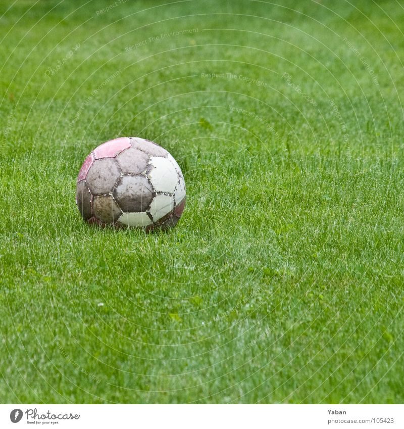 Football Ball Soccer Leather Sphere Kick Penalty kick Grass Meadow Move (board game) Holiday season Green Offside Concentrate Ball sports
