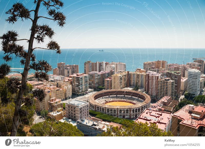 Malaga Vacation & Travel Tourism City trip Summer Summer vacation Ocean Plant Blossom Wild plant Mediterranean sea Spain Europe Town High-rise Building
