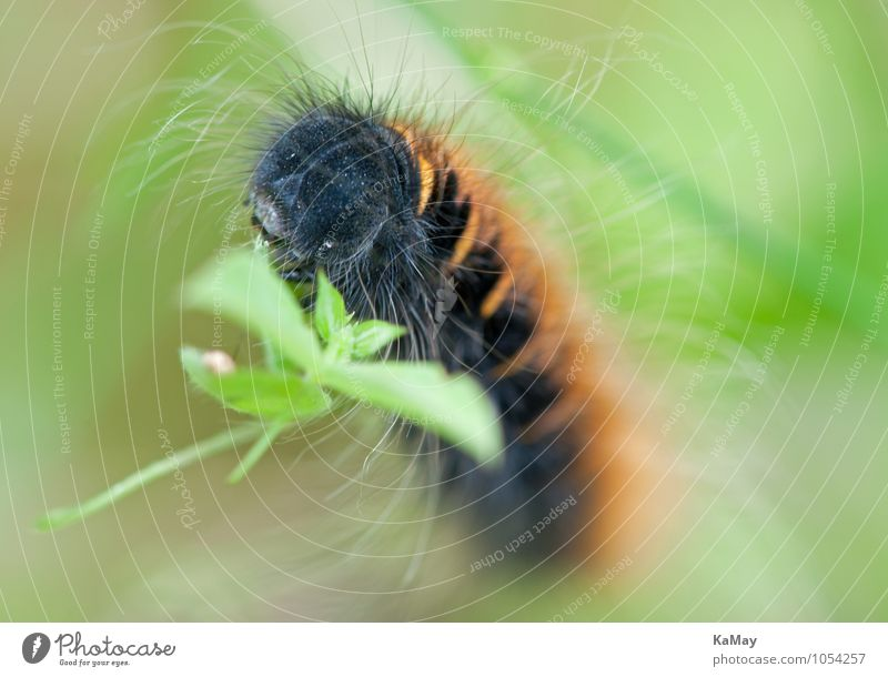Nature Beautiful Green Summer Leaf Animal Black Natural Brown Esthetic Beautiful weather Serene Insect To feed Bizarre Caterpillar
