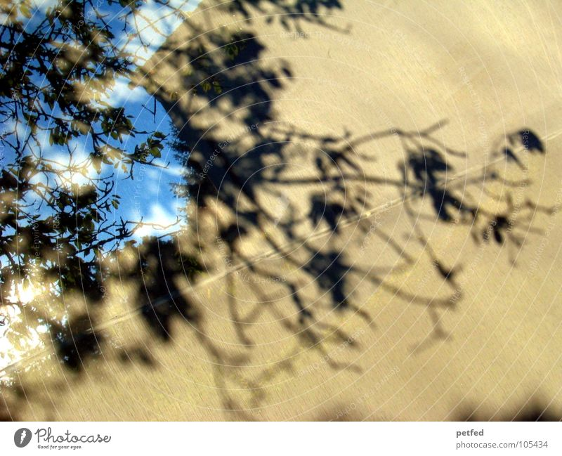 shadow tree Tree Black Gray Leaf Clouds White Forwards Drape Nature Shadow bage Blue Sky Branch Life Movement Behind Exterior shot