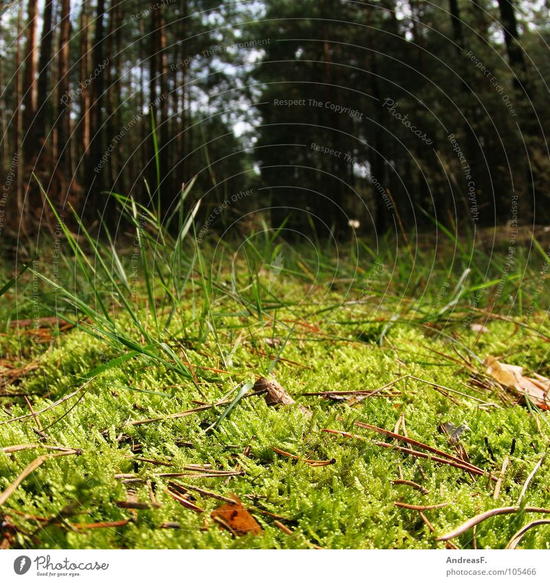 Nature Green Tree Forest Autumn Grass Wood Branch Insect Pine Branchage Spider Reptiles Coniferous trees Woodground Coniferous forest