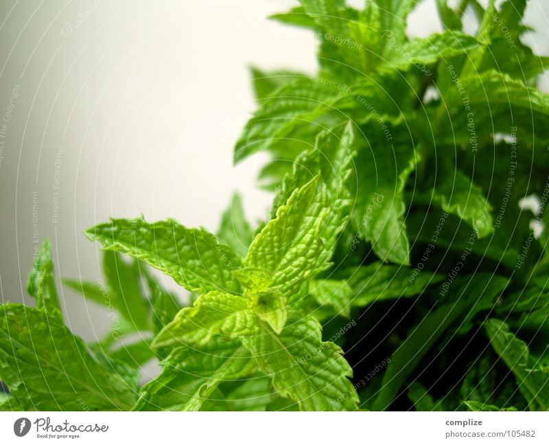 Nature Green Plant Healthy Growth Herbs and spices Organic produce Rachis Ingredients Vegetarian diet Medicinal plant Mint Dark green Bright green