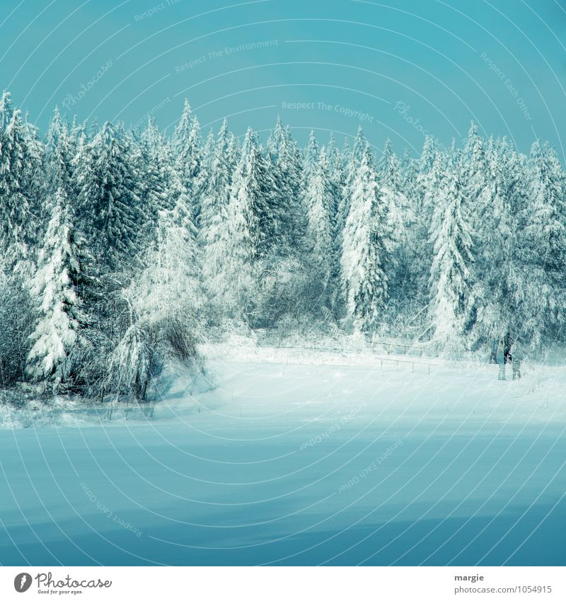 Double Winter Forest Vacation & Travel Winter vacation Nature Water Cloudless sky Ice Frost Snow Snowfall Tree Spruce forest Coniferous trees Fir tree Freeze