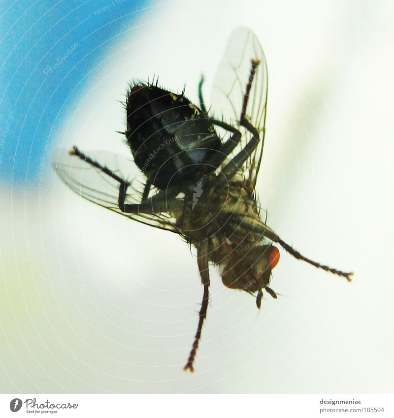 White Red Black Eyes Small Legs Waves Large Wait Fly Wing String Under Insect Delicious Airport
