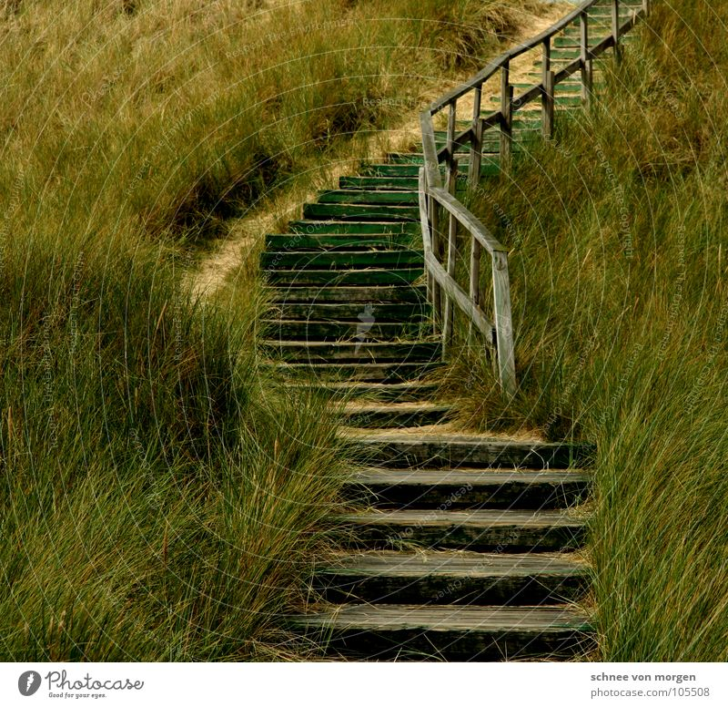 silent Ocean Lake Wood Green Grass Nature Beach Curved Nail Coast Earth Sand North Sea Beach dune Stairs Lanes & trails Upward Handrail Target Where to? mare
