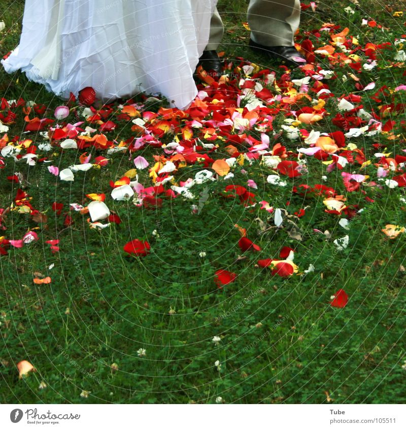 Sea of flowers and more. Blossom Red White Multicoloured Pink Woman Man Leaf Blossom leave Rose Tulip Green Bride Beautiful Bride groom Gray Married couple