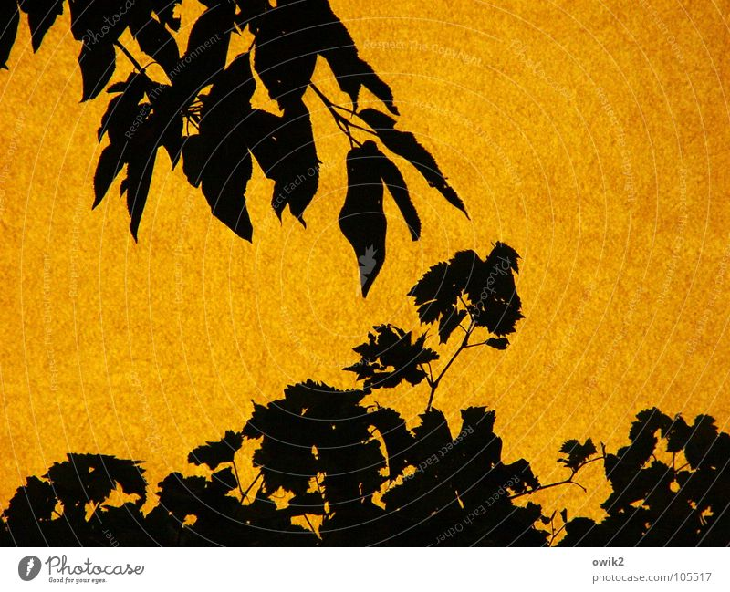 Nature Plant Summer Sun Tree Leaf House (Residential Structure) Black Environment Wall (building) Movement Wall (barrier) Garden Together Facade Orange